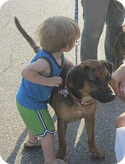 Terrier (Unknown Type, Medium) Mix Dog for adoption in Cincinnati, Ohio - Tres