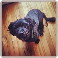 Adopt A Pet :: Munch - Ottawa, ON