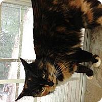 Adopt A Pet :: Peaches - Aiken, SC