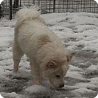 Adopt A Pet :: Handsome - Hamilton, ON