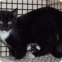 Adopt A Pet :: Snookie - Acme, PA