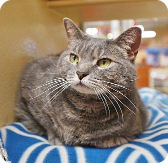 Domestic Shorthair Cat for adoption in Ocean View, New Jersey - Eanie