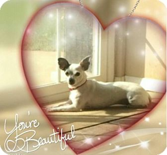 Chihuahua Dog for adoption in Baltimore, Maryland - Daisy