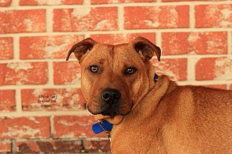 Chow Chow/Labrador Retriever Mix Dog for adoption in Flushing, Michigan - Max