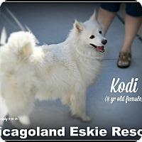 Adopt A Pet :: Kodi - Elmhurst, IL