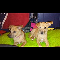 Adopt A Pet :: Shay and Ava - Staunton, VA