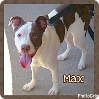 Adopt A Pet :: Max - Jasper, IN
