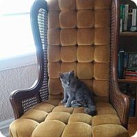Adopt A Pet :: Thor - Overland Park, KS