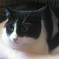 Adopt A Pet :: Panda - Scottsdale, AZ
