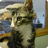 Adopt A Pet :: Chester - Quincy, CA
