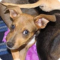 Adopt A Pet :: Arlie - Clear Lake, IA
