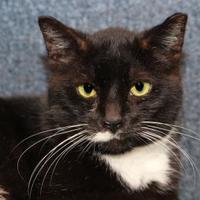 Adopt A Pet :: Tux 91 - Mentor, OH