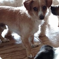 Adopt A Pet :: Angelo - Rockford, IL