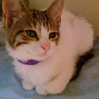 Adopt A Pet :: Martha - Flushing, NY