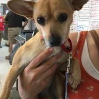 Adopt A Pet :: Beatrix - Visalia, CA