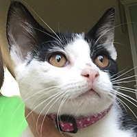 Adopt A Pet :: Lizzy - Jackson, MI