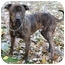 Photo 3 - Terrier (Unknown Type, Small)/Plott Hound Mix Dog for adoption in Chicago, Illinois - DQ
