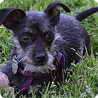 Adopt A Pet :: Woody - Simi Valley, CA