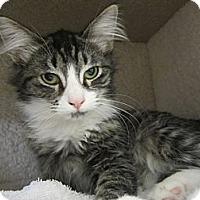Adopt A Pet :: Reed - Bunnell, FL