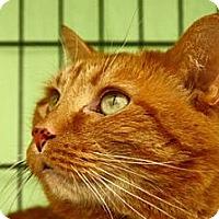 Adopt A Pet :: Leo - Lombard, IL