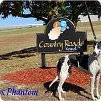 Adopt A Pet :: Phantom - Louisville, KY