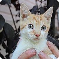 Adopt A Pet :: johnny - Santa Monica, CA