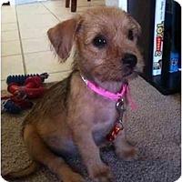 Adopt A Pet :: Ivey - Arlington, TX