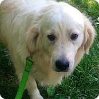 Adopt A Pet :: Cami - Knoxville, TN