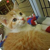 Adopt A Pet :: Private Rian - Medina, OH