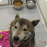 Adopt A Pet :: SHADOW - Sandusky, OH