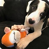Adopt A Pet :: Fool - Meridian, ID