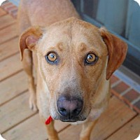 Adopt A Pet :: Charlie - Charlotte, NC