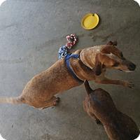 Adopt A Pet :: Ben - Chippewa Falls, WI