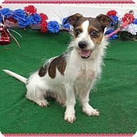 Adopt A Pet :: DOG - Marietta, GA