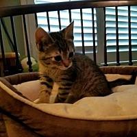 Adopt A Pet :: Kacy - Agoura Hills, CA