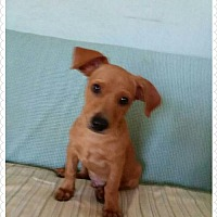 Adopt A Pet :: Hoppy - Cherry Valley, CA