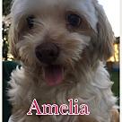 Adopt A Pet :: Amelia