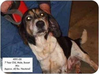 Basset Hound Mix Dog for adoption in Zanesville, Ohio - # 991-08 - RESCUED!