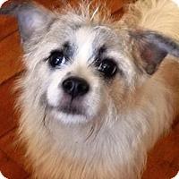Adopt A Pet :: FRITZY - Hollywood, FL
