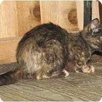 Adopt A Pet :: Fiona - Richfield, OH