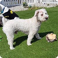 Adopt A Pet :: KEVIN - Winnetka, CA