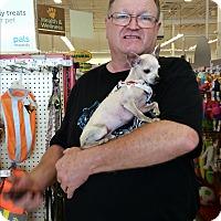 Adopt A Pet :: Taquito - Rockwall, TX