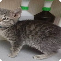 Adopt A Pet :: ELIJAH - Northfield, OH