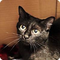 Adopt A Pet :: Tiny - Lincoln, NE