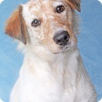 Adopt A Pet :: Surrey - Encinitas, CA