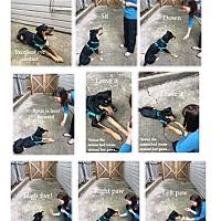 Adopt A Pet :: Roxie-Referral - Dripping Springs, TX