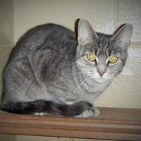 Adopt A Pet :: Whisper - Moncton, NB