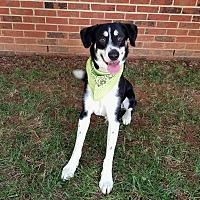 Adopt A Pet :: Max - Lexington, NC