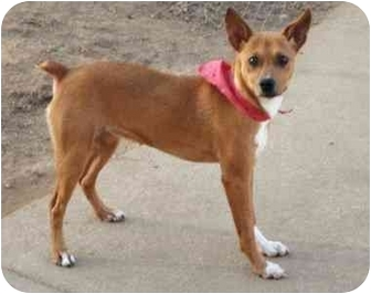 Miniature Pinscher Mix Dog for adoption in Marion, North Carolina - Madison(Maddie)