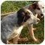 Photo 2 - Pointer/Hound (Unknown Type) Mix Puppy for adoption in Statesville, North Carolina - Bonnie and Clyde